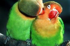 Aves para venda