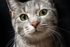 Gatos para venda