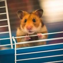 Gaiolas para Hamster