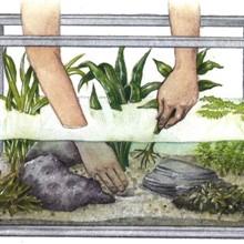 Manutenção de Plantas