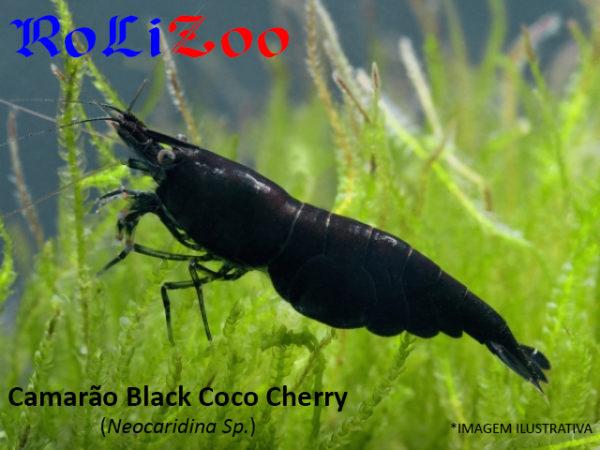 Camarão Black Coco Cherry (Neocaridina Sp.)