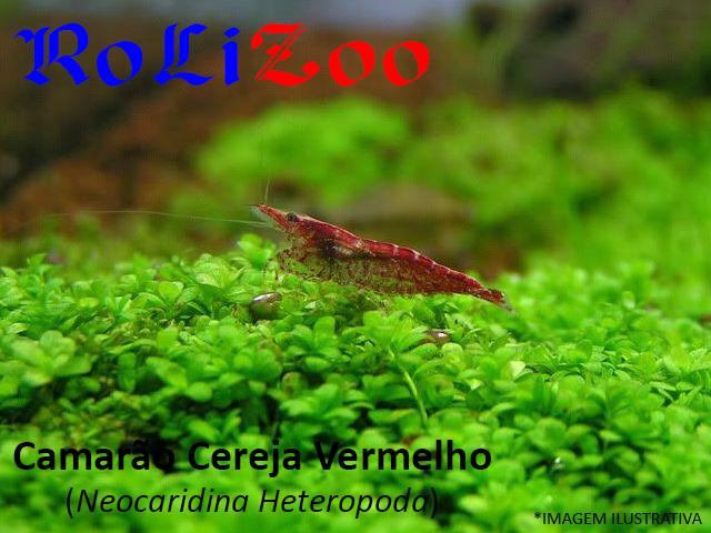 Camarão Cereja Vermelho (Neocaridina Heteropoda)