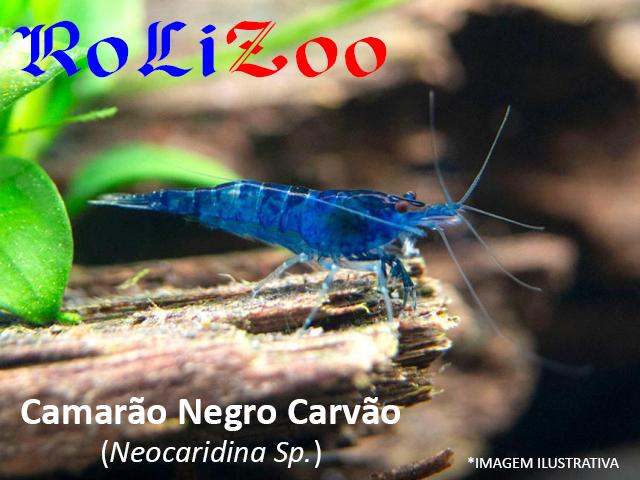 Camarão Negro Carvão (Neocaridina Sp.)