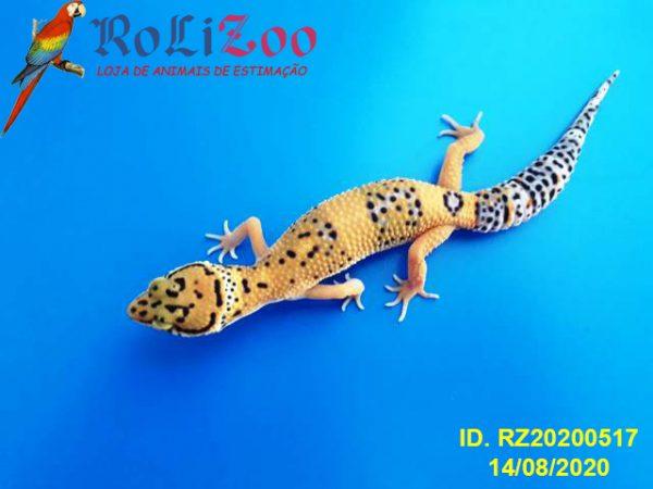 "Gecko Leopardo<br>""Tangerine""<br>(Eublepharis Macularius)"