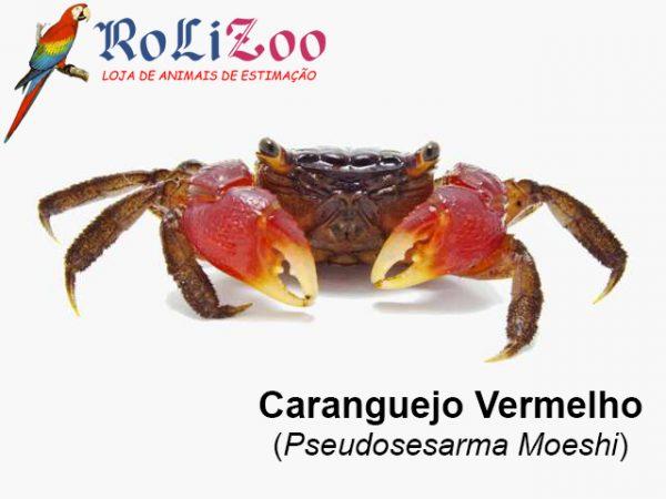 Caranguejo Vermelho<br>(Pseudosesarma Moeshi)
