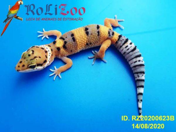 Gecko Leopardo<br>(Eublepharis Macularius)
