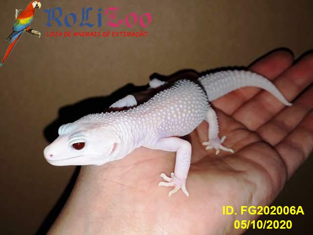 "Gecko Leopardo<br>""Super Raptor""<br>(Eublepharis Macularius)"
