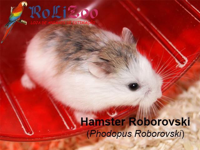 Hamster Roborovski<br>(Phodopus Roborovski)
