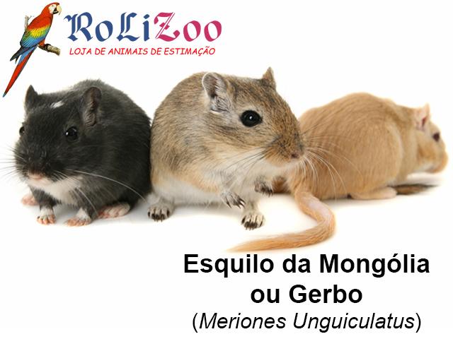 Esquilo da Mongólia ou Gerbo<br>(Meriones Unguiculatus)