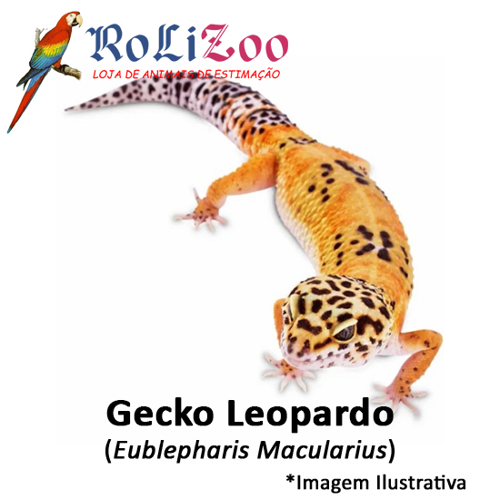 Gecko Leopardo<br>(<em>Eublepharis Macularius</em>)